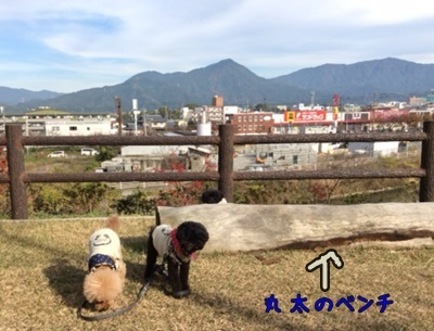 11散歩2