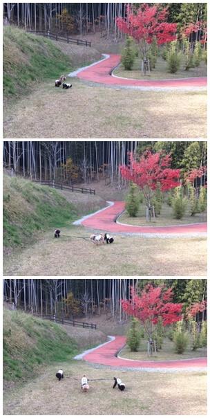 11散歩4