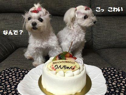 BDケーキ (1)