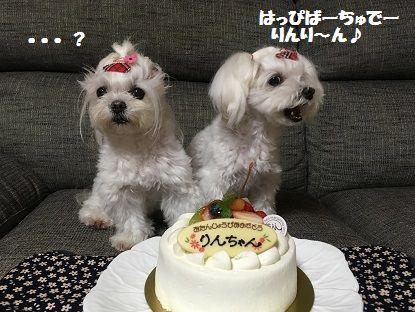 BDケーキ (2)