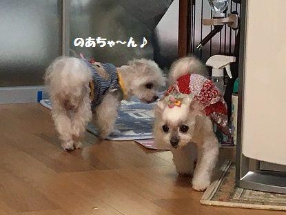 とくちゃん 前 (7)