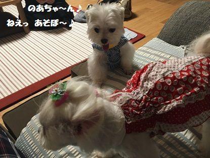 とくちゃん 前 (8)