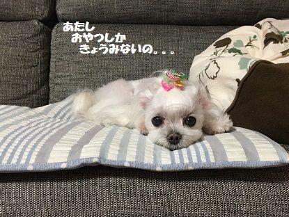 とくちゃん 前 (9)