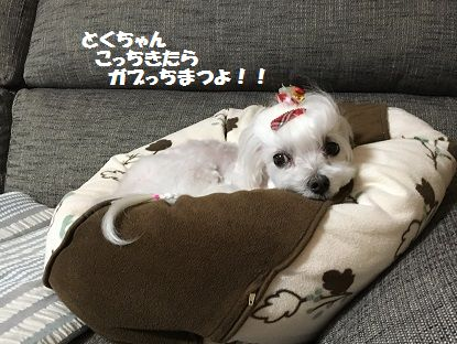とくちゃん 前 (10)