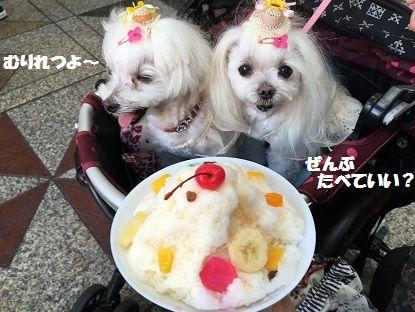 とくちゃん 後 (8)