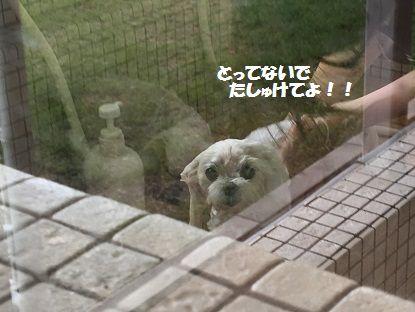 狗の郷 (5)