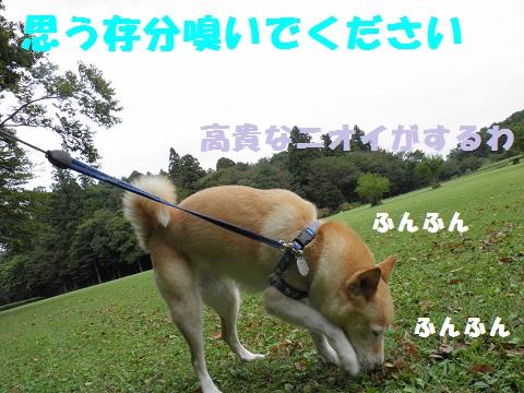 PA010309-1.jpg