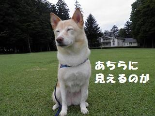 PA010313-1.jpg