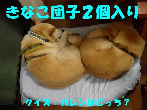 PA010317-1.jpg