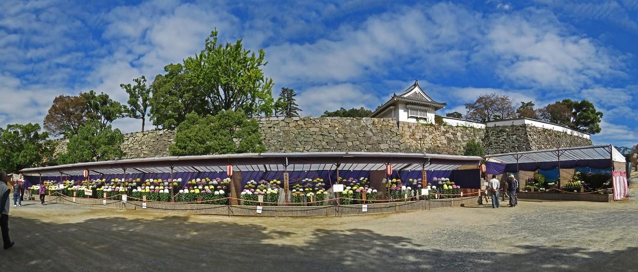 s-20161102 烏城公園の菊花大会の様子ワイド風景 (1)