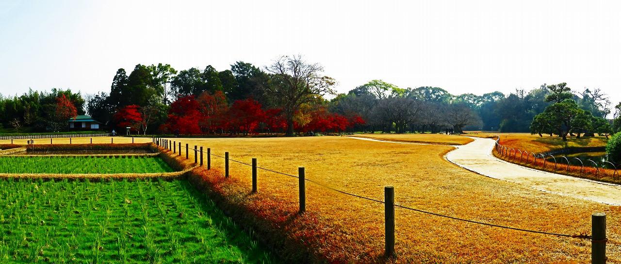 20161209 後楽園井田西端から眺めた初冬の千入の森の紅葉の様子ワイド風景 (1)