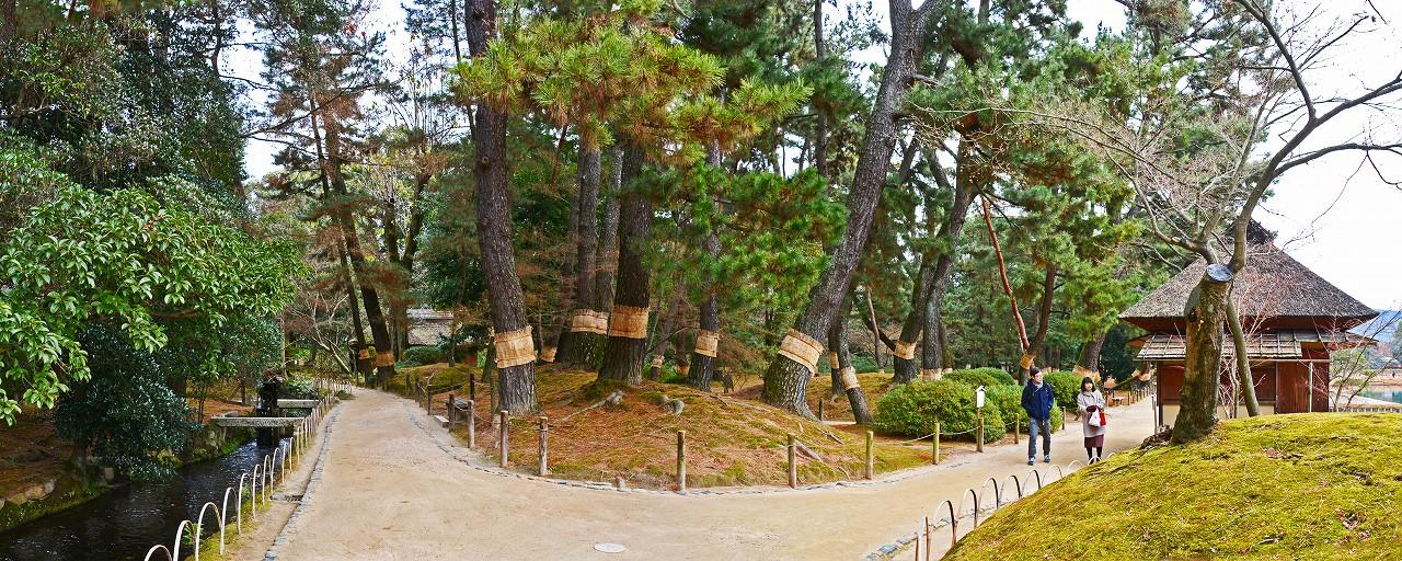 20161229 後楽園今日の園内松林のワイド風景 (1)