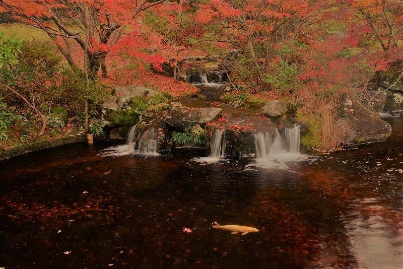 まきび公園の紅葉6