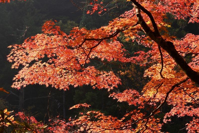 奥津溪の紅葉4