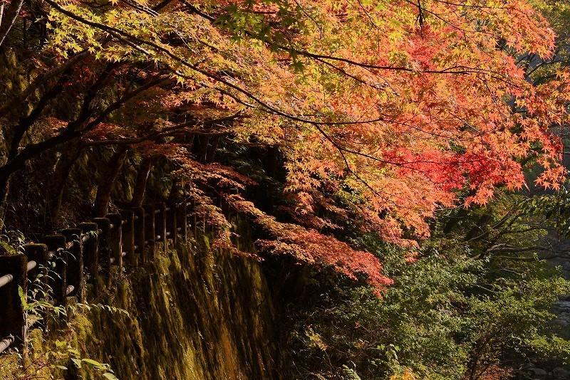 奥津溪の紅葉8