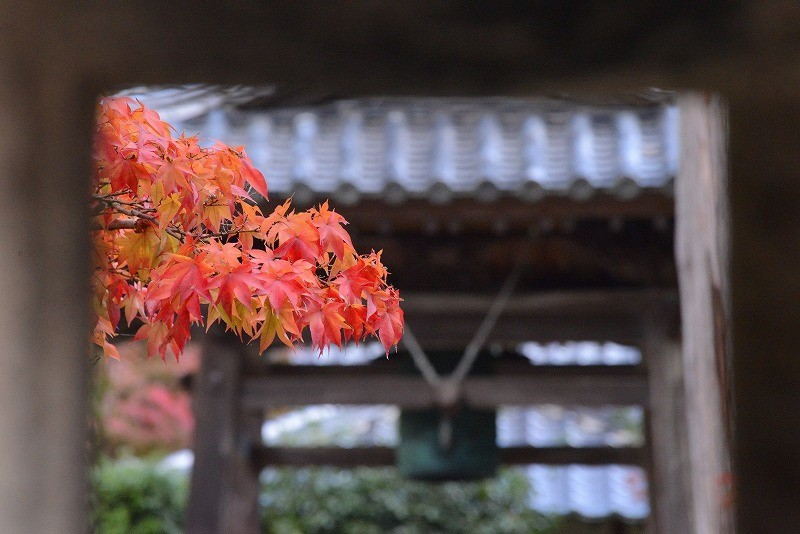 宝福寺の紅葉4