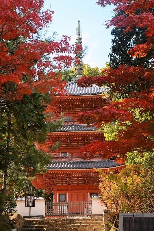 宝福寺の紅葉11