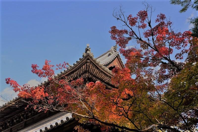 宝福寺の紅葉13