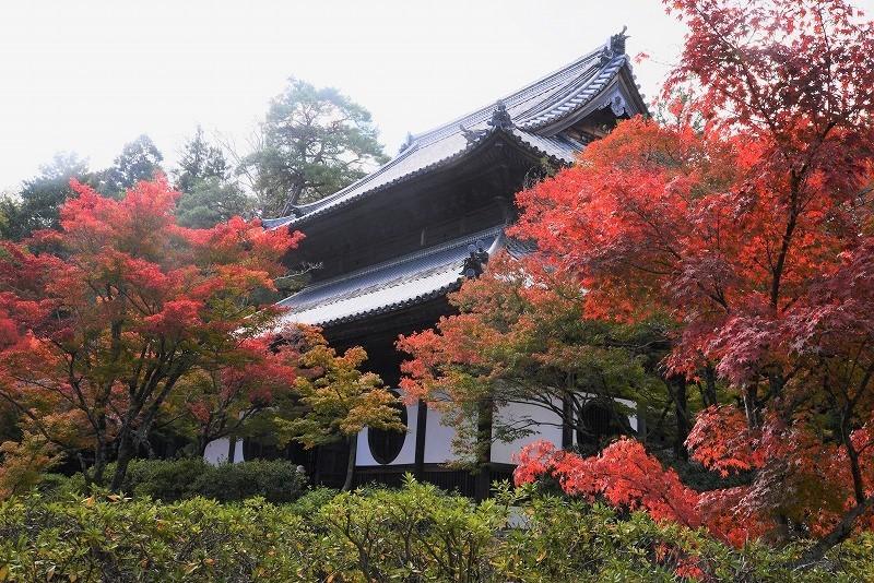 宝福寺の紅葉17