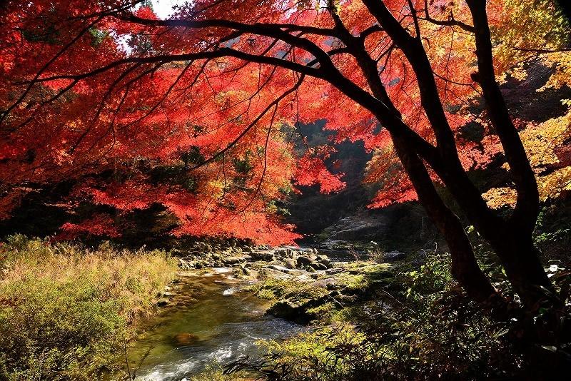 奥津溪の紅葉2