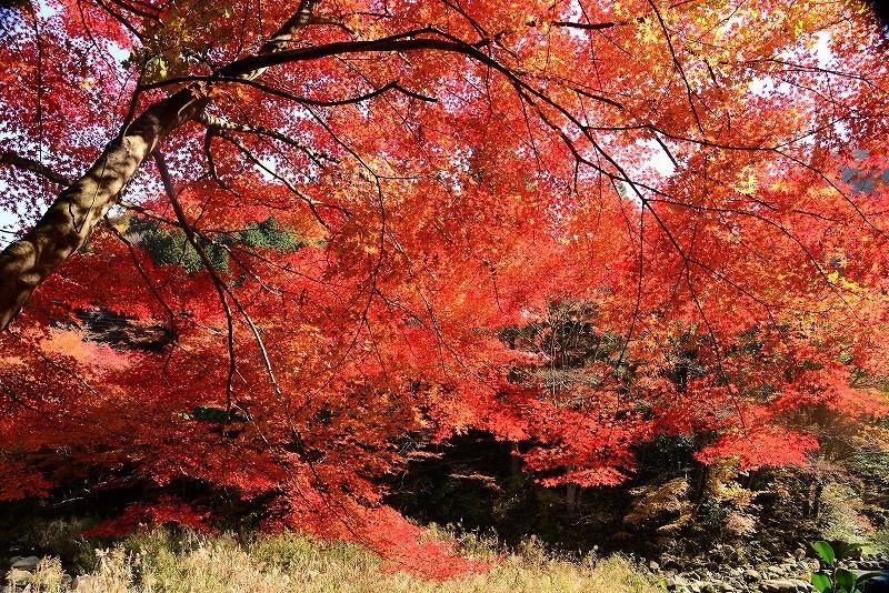 奥津溪の紅葉3