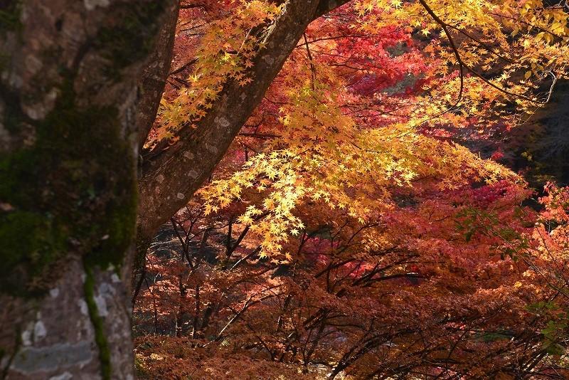奥津溪の紅葉10