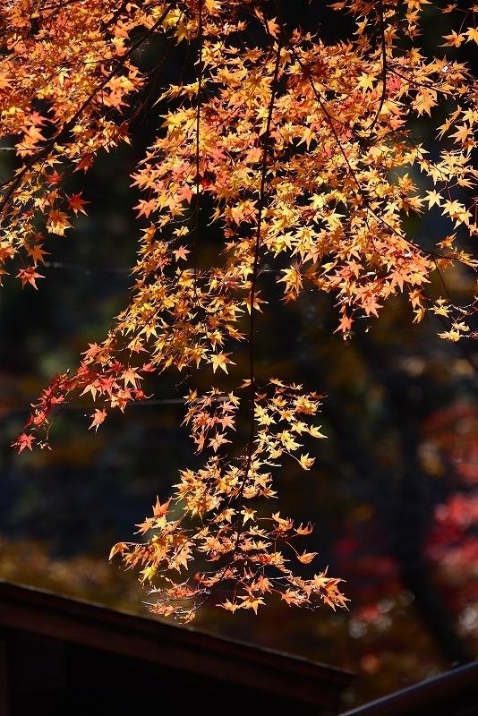 奥津溪の紅葉11