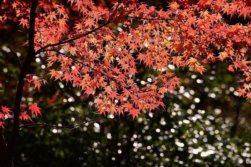奥津溪の紅葉15