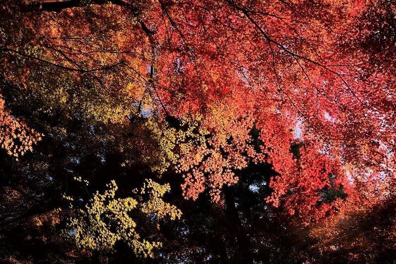 奥津溪の紅葉18