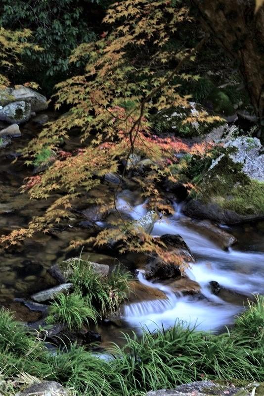 豪渓の紅葉3