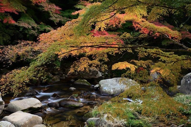 豪渓の紅葉5