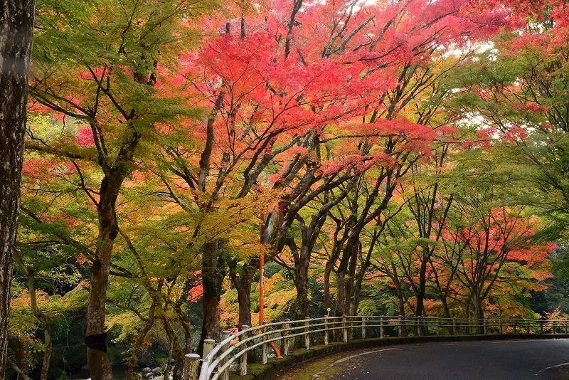 豪渓の紅葉4