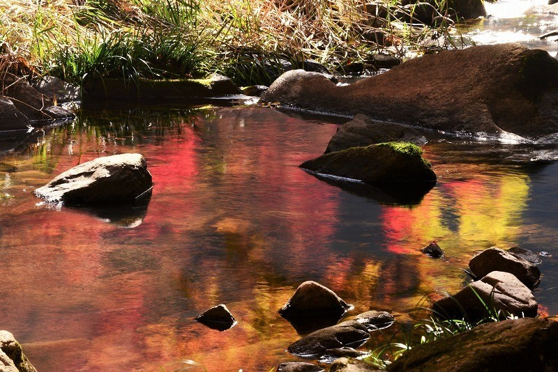 豪渓の紅葉14