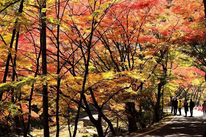 豪渓の紅葉18
