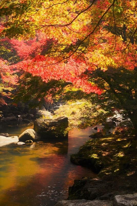 豪渓の紅葉20