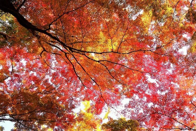 豪渓の紅葉21