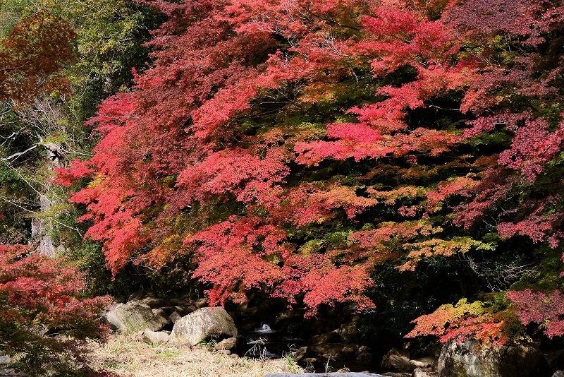 豪渓の紅葉7