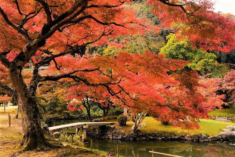 近水園の紅葉1