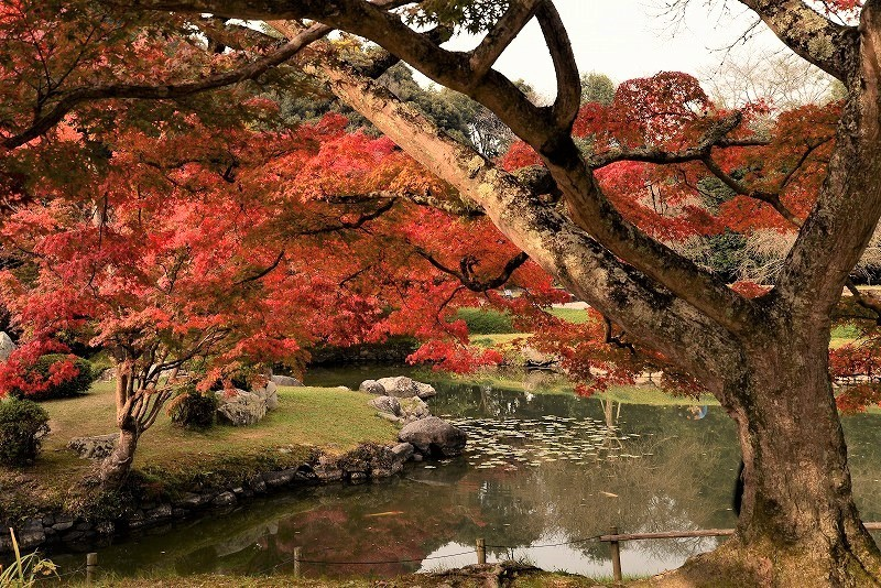 近水園の紅葉2