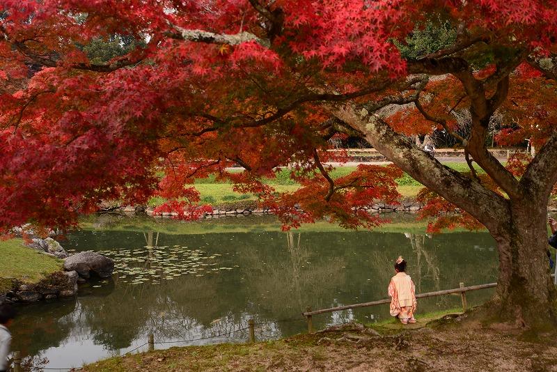 近水園の紅葉4