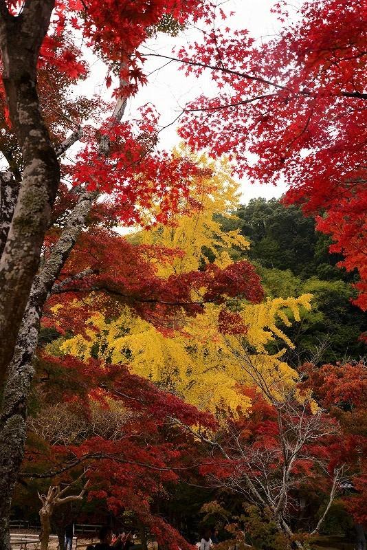 近水園の紅葉6