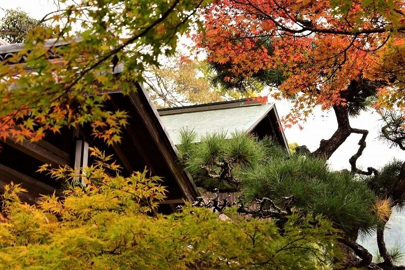 近水園の紅葉7
