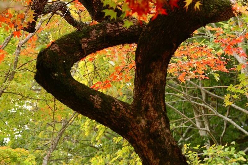 近水園の紅葉9