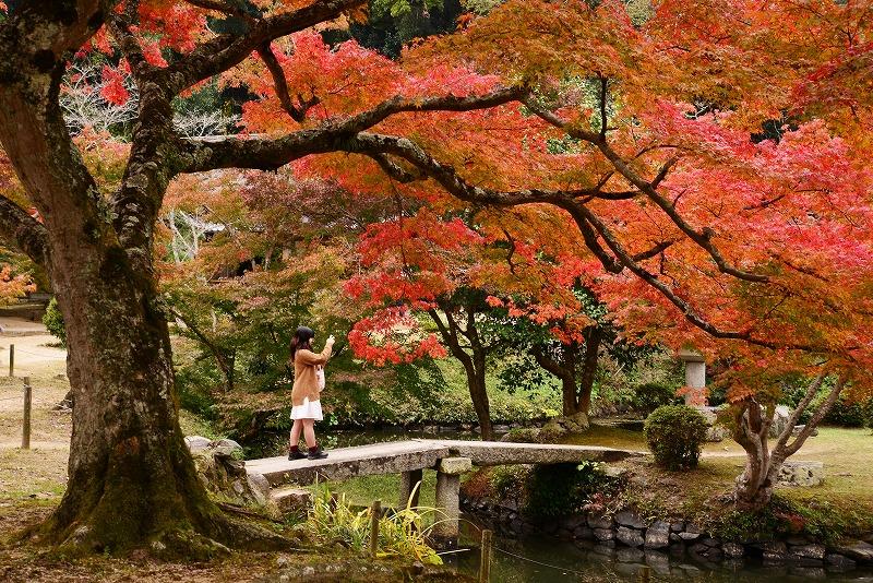 近水園の紅葉15