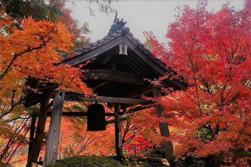 鐘突き堂の紅葉1