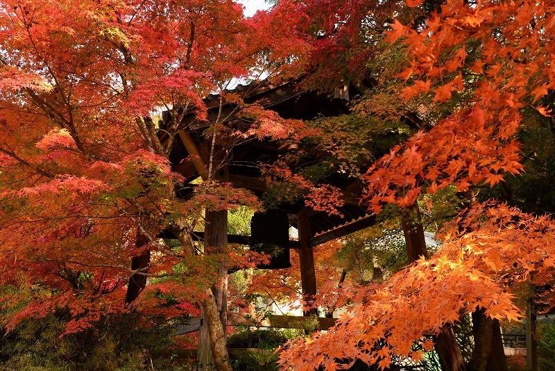 鐘突き堂の紅葉2