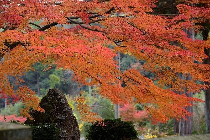 龍泉寺の紅葉4