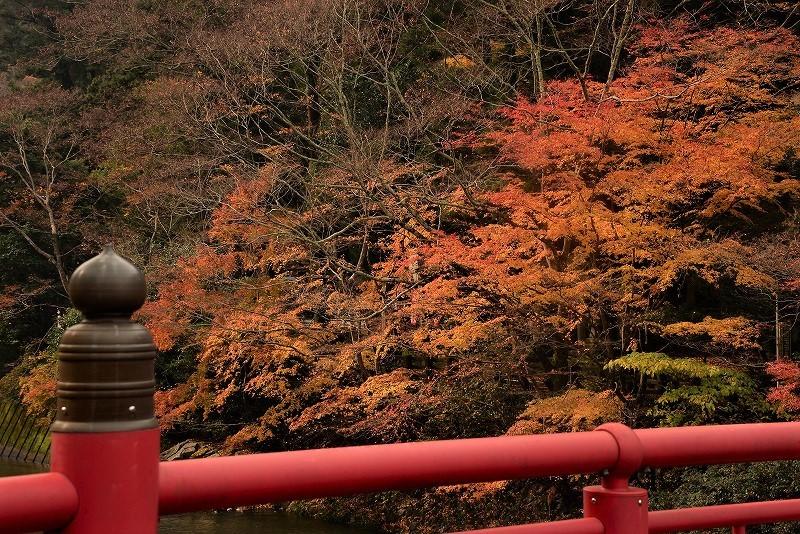 天神峡の紅葉2