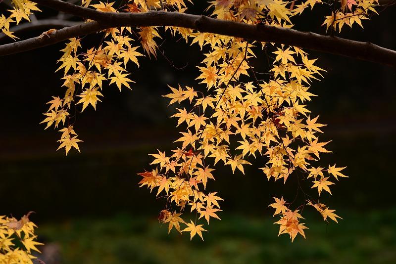 天神峡の紅葉5