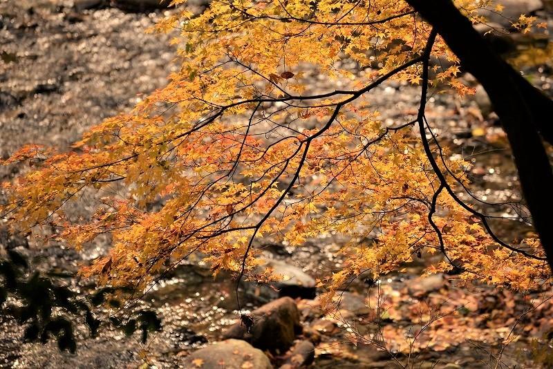 天神峡の紅葉6